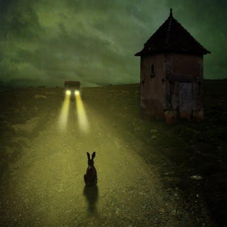 Un lapin regarde une voiture arriver comme une entreprise voit une menace arriver sans réagir.